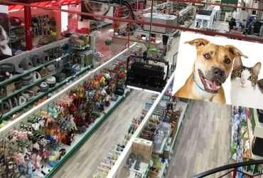 Pawvie Pet store in Noida